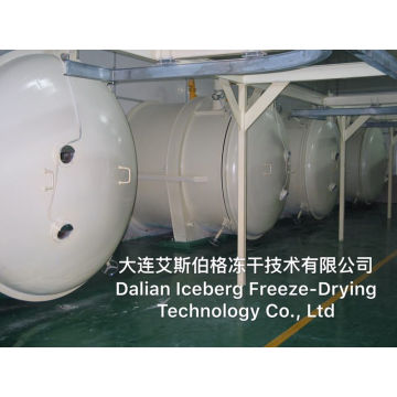 Heating Area 125m2 Freeze Dryer