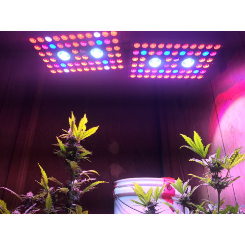 High Bright 1200w COB LED Grow Light