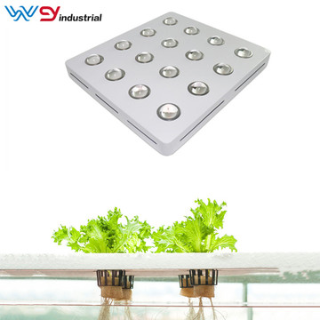 3200W led grow lights vs sunlight