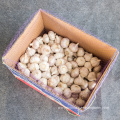 normal white garlic size4.5cm 10kg carton ghana price