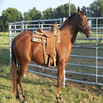 High Tensity Flexible pales Horse Fence for Farm