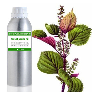 Wholesale 100% natural sweet perilla essential oil