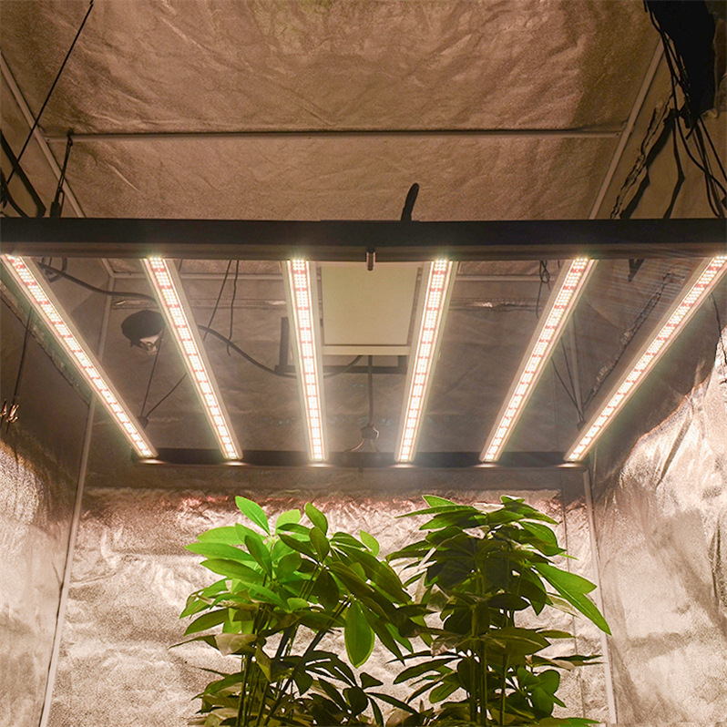 horticulture grow lights