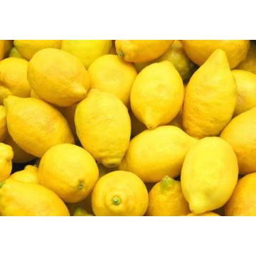SUPER QUALITY FRESH LEMON NEW CROP