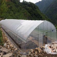Economica Plastic Sheet Single Tunnel Greenhouse