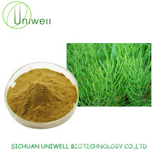Equisetum Arvense Extract Horsetail Extract Powder