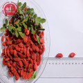 GMP Factory Best Selling Low pesticide Goji Berries