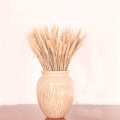 50pcs natural dried flower bouquets natural raw color dried ear of wheat bouquets wheat ear Bunches