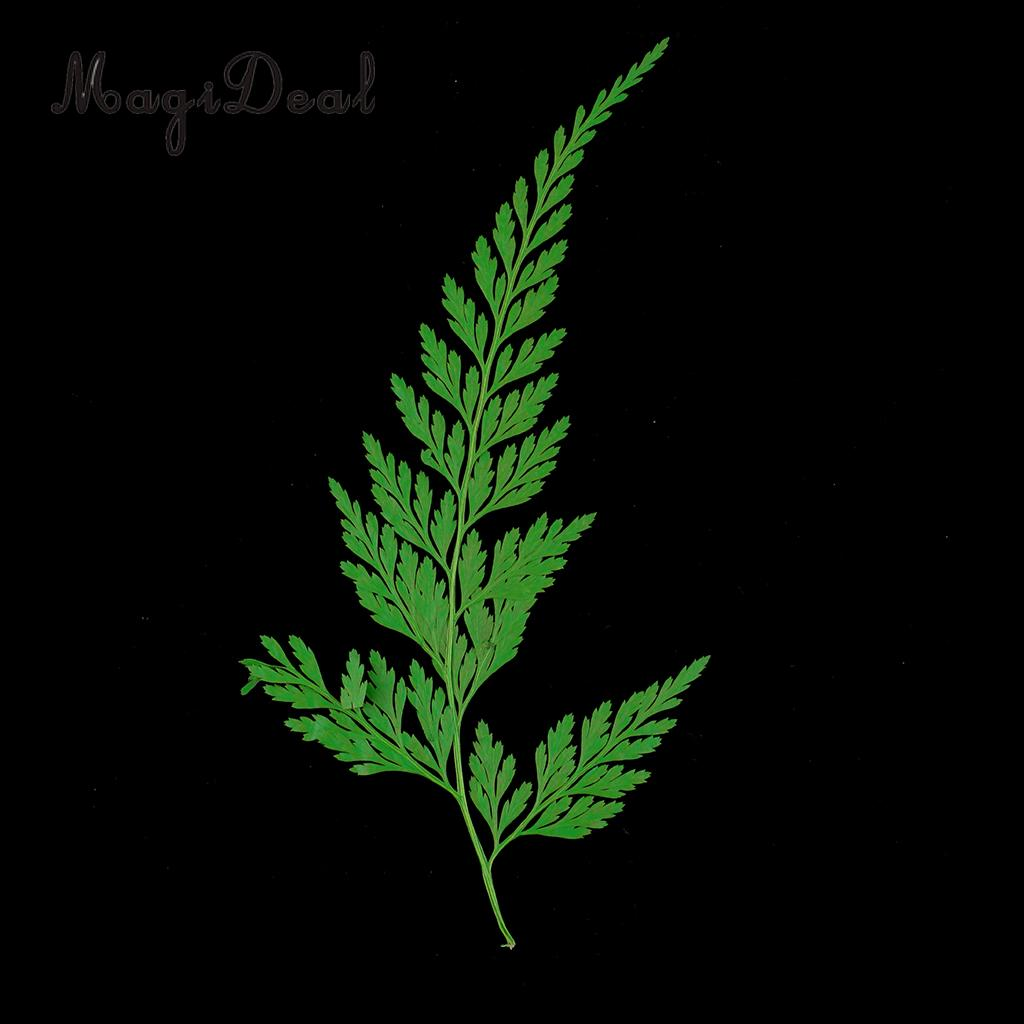 12pcs Natural Press Fern Leaves Pressed Real Dried Flower Dry Leaves for DIY Crafts Bookmark Scrapbooking Card Making
