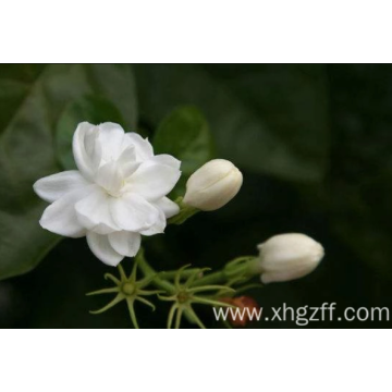 jasmine essential oil in bath
