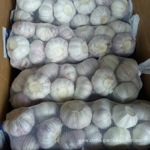 New Crop Fresh Garlic Market Price 1KG