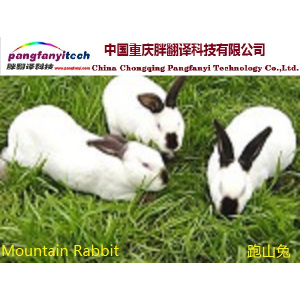 Natural  Healthy  Self-breeded  Mountain Rabbit
