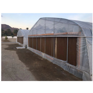Galvanized steel Frame Single span PE Film greenhouse for Agriculture