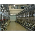 Dairy farm milking parlor for cows