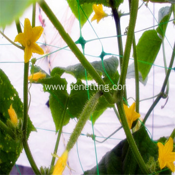 cucumber growing plant support netting