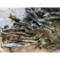 new crop kelp raw material high quality sun dried