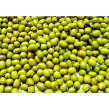Fresh Chinese Green Mung Beans