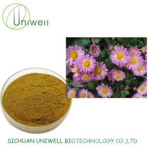 High Quality Echinacea Extract Polyphenol Powder