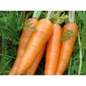 fresh good quality red delicious carrot