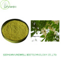 Cheap Sophora Japonica Extract Powder Rutin NF11 95%