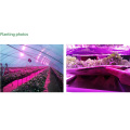 Large Greenhouse Grower LED Plant Grow Light