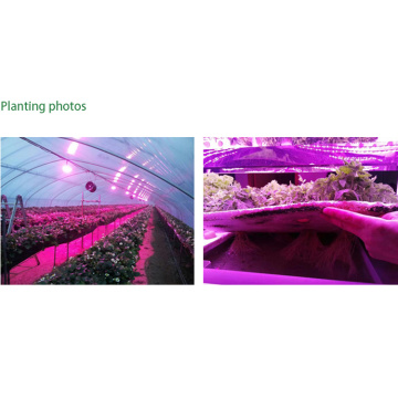 400W Grow Light Dimmable