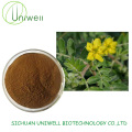 Tribulus Terrestris Extract UV 40% Saponins Powder