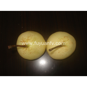 Export Standard Quality of Fresh Ya Pear