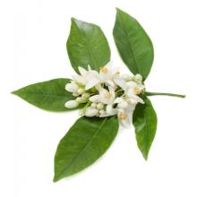Cosmetic Grade Neroli Essential Oil