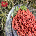 Medicinal Certified healthy Low pesticide Goji Berries