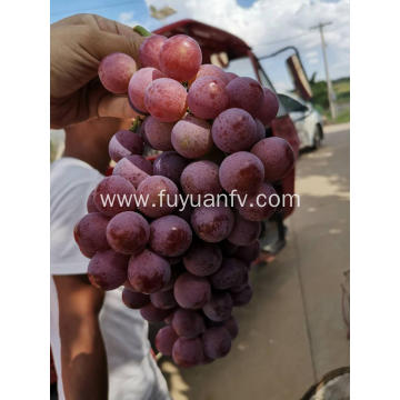 Yunnan red globe grapes