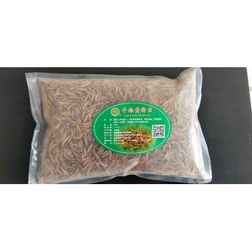 Yellow mealworm for birds