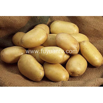 tengzhou fresh potato hot sale