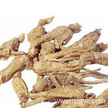 ginseng extract health tea