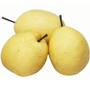 Fresh orgin new crop Gung pears