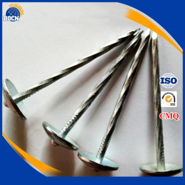 twisted shank galvanized competitive zinc roofing nail