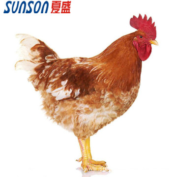 Manufacture supply poultry enzyme for  feed additive