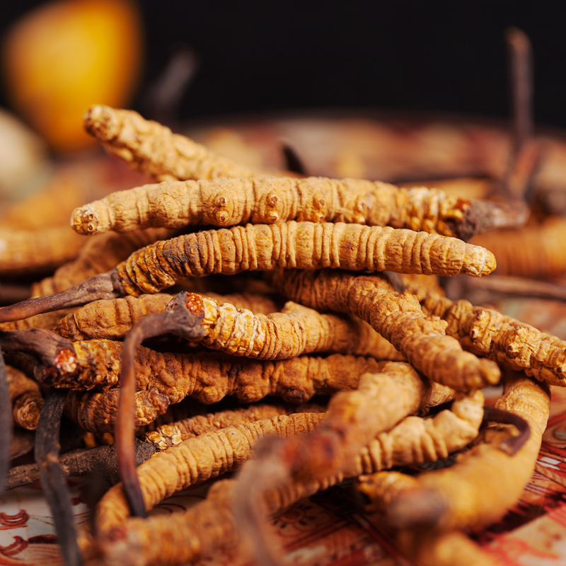 5 pieces of pure natural Cordyceps sinensis from Tibet, China, free shipping