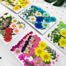 small Real Dried Flower Dry Plants For Candle Epoxy Resin Pendant Necklace Jewelry Making Craft DIY Accessori