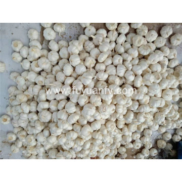 Top quality 5.0cm pure white garlic