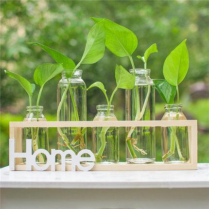 Hydroponic small vase creative glass green radish transparent small fresh water plant desktop decoration ornaments living room f