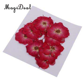 MagiDeal 10 Pcs Multiple Beautiful Natural Real Rose Violet Dried Pressed Flowers for DIY Scrapbooking Crafts Red for Phone Case