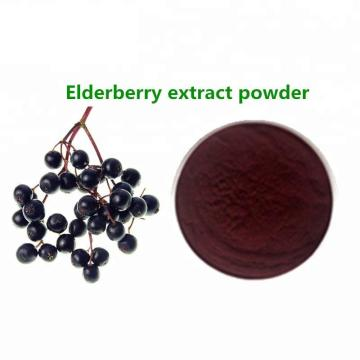 Black Elderberry Extract Powder