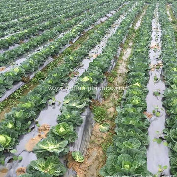 Plastic Mulch Film for Agricultural Vegetable Film
