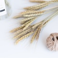 20 Stems Natural Dried Flowers Decorative Flowers Wheat Ear Bouquet Dried Branches Wedding Decoration Flower Wreath DIY