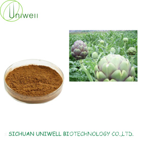 Artichoke Extract Powder 4:1 10:1