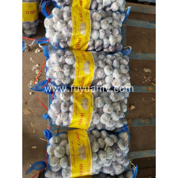 FRESH GARLIC LOOSE PACKING