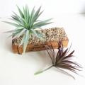 Artificial Plants Green Purple Succulents Simulation Plants Home Decoration Flower Spring Grass Plastic Plants