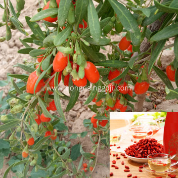 Goji berry to Increase calcium absorption