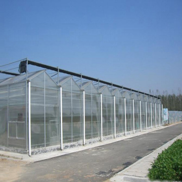 Venlo Multi-Span PC Board Agricultural Greenhouse